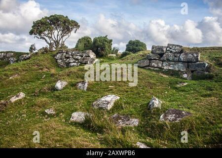 Bodmin moor, paisaje, ruinas de granito, árbol, gorse, rocas,
