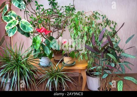 Una variedad de plantas en macetas en la casa.