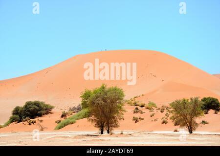Gran Mama en der Namib Namibia