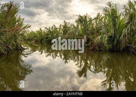 Misterioso río en una selva al atardecer cerca de Tangalle, Sri Lanka. Vista panorámica de los humedales en la selva tropical. Paisaje de laguna tropical en el crepúsculo. Sce