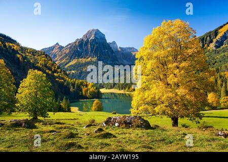 Sicamore arce, gran arce (Acer pseudoplatanus), lago Obersee y Bruennelistock en otoño, Suiza, Glarner Alpen, Glaris