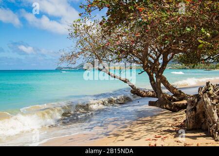 Atractivo paisaje de playa - almendros crecidos en la playa y una ola de energía rompiendo en un día brillante con un cielo azul azul celeste y nubes blancas