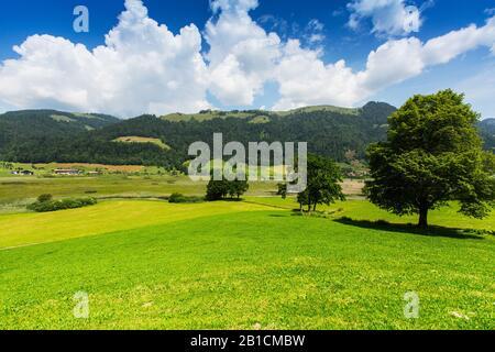 Paisaje de Moor Schwemm, Austria, Tirol, Schwemm, Walchsee
