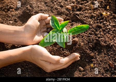 Crecimiento de plantas jóvenes frescas en el suelo en la mano. Planta, árbol como símbolo de comenzar nueva vida, el cuidado de la crianza y la conservación del medio ambiente. Manos femeninas