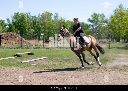 El deportista en un caballo. La horsecomana en un caballo rojo. Ecuestrismo. Paseos a caballo. Carreras de caballos. Rider en un caballo.