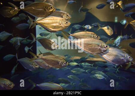 El acuario de Carolina del Sur es la manera perfecta de aprender sobre los maravillosos animales marinos que se muestran en las exposiciones.