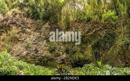 Panorama de los helechos y otras plantas colgando de las rocas en Fern Grotto en el río Wailua en Kauai