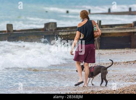 Mujer joven caminando un perro a lo largo de la playa mientras se acolchado en el mar.