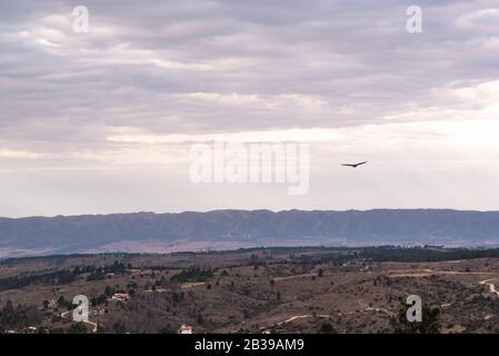 Buitre negro, buitre o jote negro volando sobre un valle con una cadena montañosa en la parte trasera