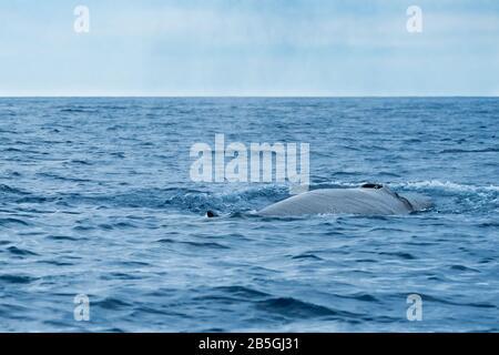 Una ballena sei cerca del archipiélago de las Azores