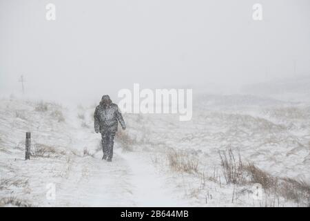 Hombre caminando en una tormenta de nieve durante la tormenta Jorge al lado de la carretera entre las colinas y el cerro. Febrero De 2020. Fronteras escocesas, Escocia