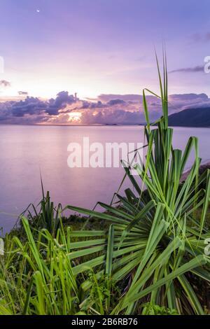 Vista del amanecer a través de hojas de palma pandanus desde el mirador Rex, en Wangetti en Queensland, como una tormenta se enciende en el horizonte del Océano Pacífico.