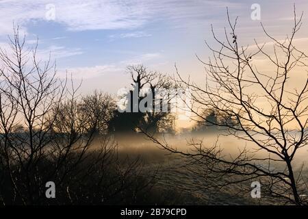Silueta de árboles y ramas en la mañana de invierno con niebla misteriosa y espeluznante en los campos de fondo al amanecer