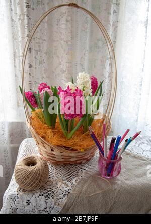 En un mantel de encaje hay una cesta llena de jacintos de colores brillantes. Foto de stock