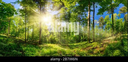 Pintoresco bosque de árboles caducos, con cielo azul y el sol brillante iluminando el follaje verde vibrante, vista panorámica Foto de stock