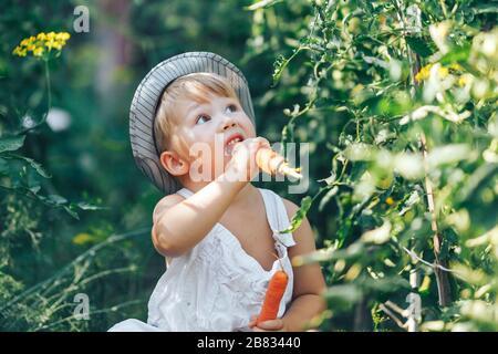 niño pequeño granjero niño sentado en línea de plantas de tomates, usando mono blanco casual y sombrero gris, comer zanahoria, tiempo de cosecha