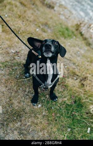 retrato el cachshund en miniatura de pelo de alambre está parado sobre una piedra gris