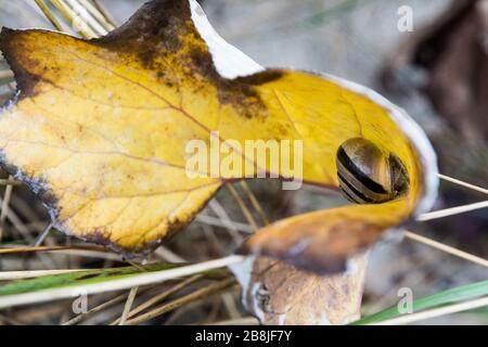 Eine Schnecke mit Schneckenhaus in einem Blatt Foto de stock
