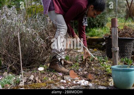 Mujer joven que se estira y raking hojas en flor con montículos de piedra hechos a mano en primavera. Refresque el jardín. Vista lateral.