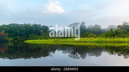 Amazon Rainforest Panorama en niebla. La cuenca del río Amazonas comprende los países de Brasil, Bolivia, Colombia, Ecuador, Guyana, Venezuela, Perú y Surinam.