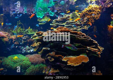 maravillosa naturaleza submarina con peces de colores