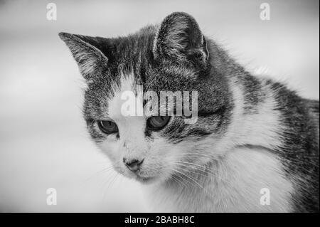 Un gato blanco de la calle manchada se sienta en un cerca.Cat, camina, calle, primavera. Primavera en gatos. Soleado dayWhite gato está en la valla