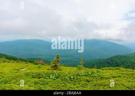 prados alpinos de runa, ucrania. hermoso paisaje natural de las montañas de los cárpatos en verano