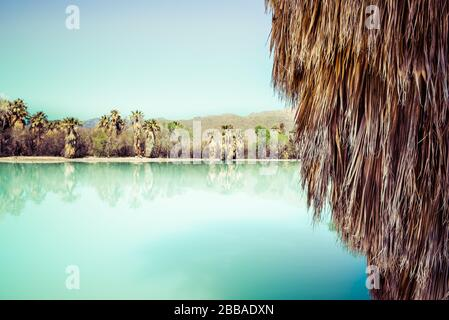 Detalle de falda de palmera con reflejos en un estanque de color turquesa desde un manantial en el Aqua caliente Park con vistas a la montaña en Tucson, Arizona Foto de stock