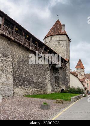 Casco antiguo Muro medieval de fortificación y torres de vigilancia, Tallin, Estonia Foto de stock