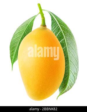 Mango aislado. Un mango amarillo colgado en una rama de árbol con hojas aisladas sobre fondo blanco Foto de stock