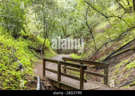 Creek-Crossing Footbridge en el exuberante Bay Laurel Forest Canyon