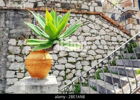 Agave planta en una olla de arcilla en un pedestal cerca de una escalera contra una antigua pared de mampostería en Taormina, Sicilia