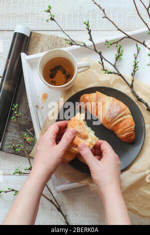 Manos de mujer sosteniendo un croissant y una taza de té sobre una mesa blanca. Escena de estado de ánimo de primavera desde arriba