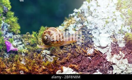 foto macro de un pequeño caracol sobre musgo verde con fondo difuminado en colores suaves