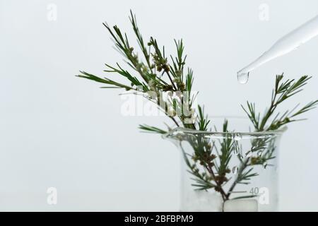 planta verde con flor pequeña blanca en vaso de precipitados de ciencia con gota de agua del cuentagotas de vidrio en laboratorio de investigación médica cosmética