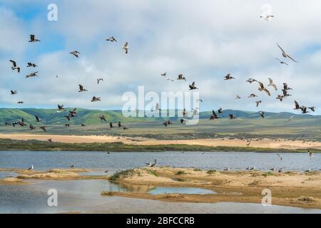 Rebaño de aves en la playa. Pelícanos y gaviotas volando sobre el río. Hermosas colinas verdes, dunas de arena y cielo nublado en el fondo. Guadalupe-N