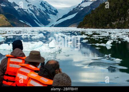 Turistas que ven delfines en el crucero Capitan Constantino en Fjord Calvo en el borde del Canal Sarmiento en Bernardo o'Higgins Nati