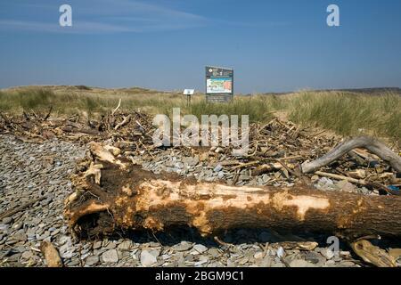 Troncos arrastrados en la playa cerca de signo de Merthyr Mawr Reserva Nacional de naturaleza en el extremo sureste de la reserva