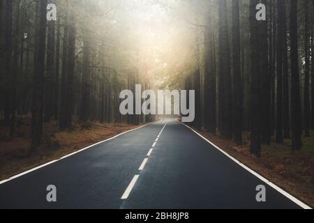 Camino largo con sol al final de la montaña con bosques de pinos y nubes de niebla en frente y cielo gris claro - punto de vista del suelo con asfalto negro y líneas blancas - concepto de conducción y viajes