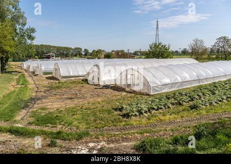 """Ferrara, Italia. 22 de abril de 2020. Invernaderos con frutas y verduras en la comunidad de recuperación """"Casa di Stefano"""" (Casa de Stefano) en Ferrara, ITA"""