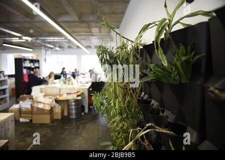 Una oficina de moda para desking caliente con plantas de casa verde. Concepto abierto de entornos de trabajo modernos.
