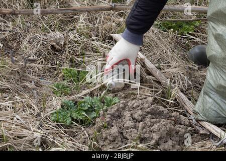 Plan de cierre la mano de un voluntario recoge una botella de plástico de la hierba en el bosque. Detener el plástico, concepto social, responsabilidad civil, medio ambiente