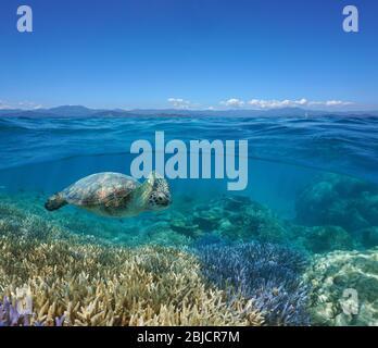 Paisaje marino bajo la superficie del agua, arrecife de coral con una tortuga marina bajo el agua y la costa de la isla Grande-Terre en el horizonte, Nueva Caledonia