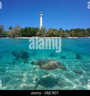 Una tortuga verde submarina con la costa de la isla Amedee y su faro, vista dividida bajo la superficie del agua, Nueva Caledonia, océano Pacífico