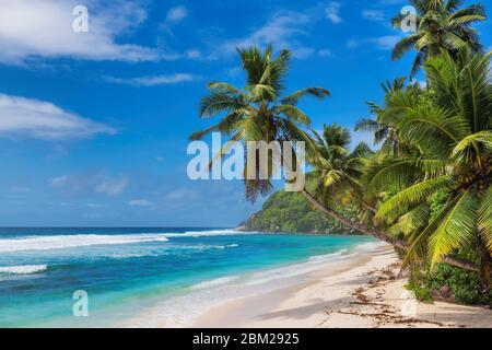 Palmeras en vacaciones de verano en la playa tropical