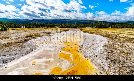 La esterilla bacteriana en el canal de drenaje del Gran Geyser en la Cuenca del Geyser Superior a lo largo del sendero Continental divide en el Parque Nacional Yellowstone