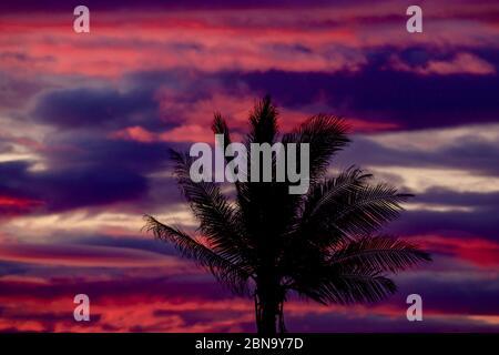 Espectacular paisaje nublado de color rojo y púrpura con silueta de palmeras durante la puesta de sol Foto de stock