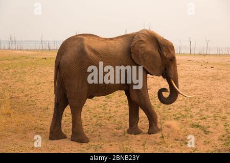 Elefantes en el Parque Nacional Matusadona a orillas del Lago Kariba, Zimbabwe