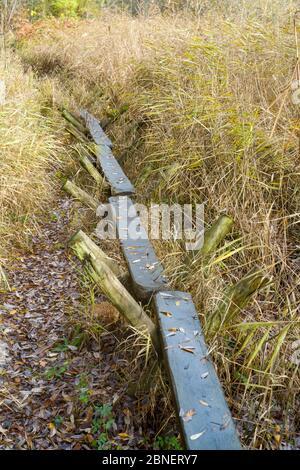 Réplica de la pista dulce - antigua vía construida en tiempos neolíticos cruzando el pantano de caña de las marismas de Avalon con polos conducidos a la turba, Somerset,