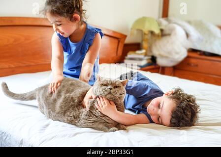 Feliz niños con su mascota tumbada en la cama. Niño y niña jugando con gato en una cama en casa. Foto de stock